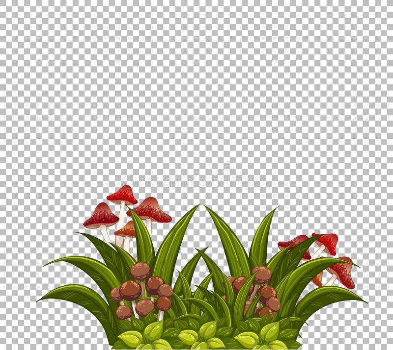 Champinjon på gräsmattamallen vektor illustrationer
