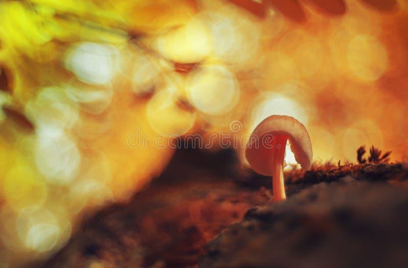 Champinjon under färgrika träd arkivfoton