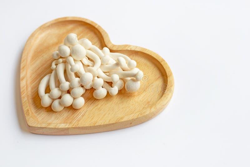 Champinjoner för vit bokträd, Shimeji champinjon, ätlig champinjon på vit arkivbild
