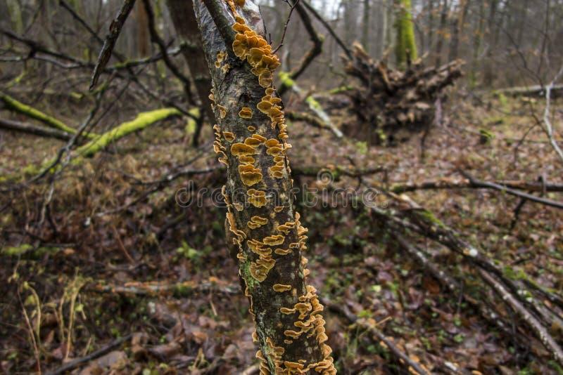 Champinjoner och mossa som växer på filialerna av den brutna träddurinen royaltyfria bilder