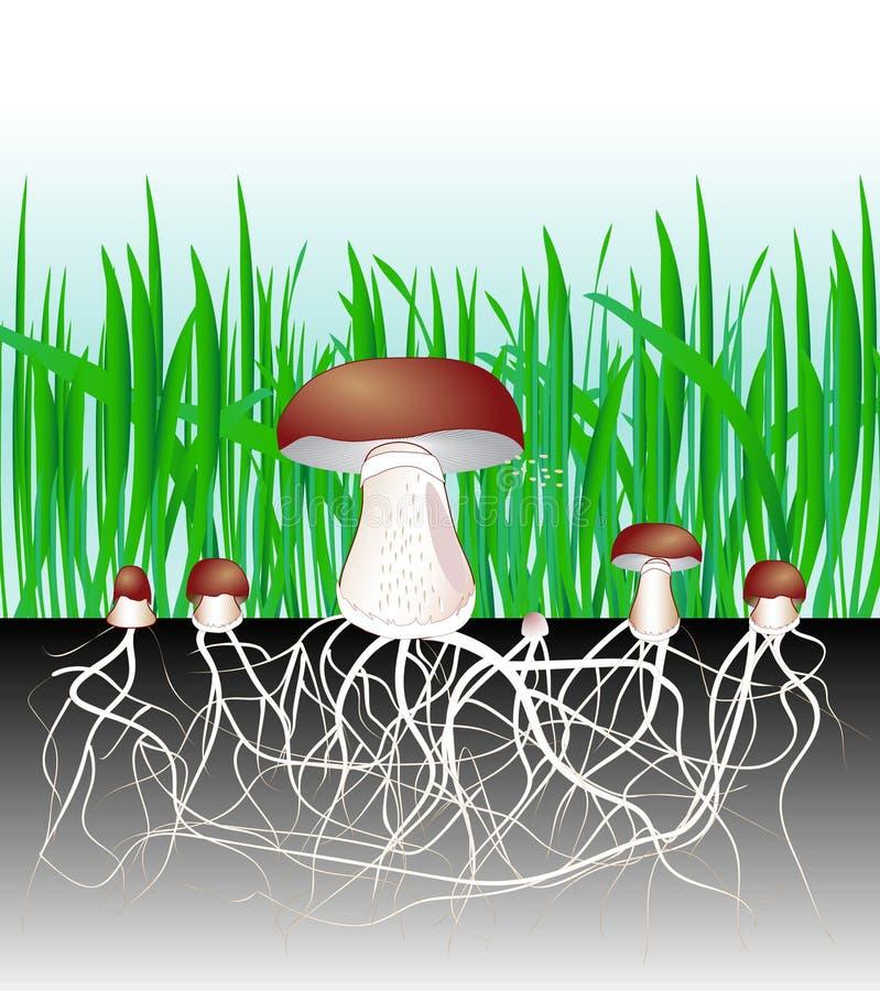 Champinjoner och vegetation. Svamp. Mycelium. Spor stock illustrationer