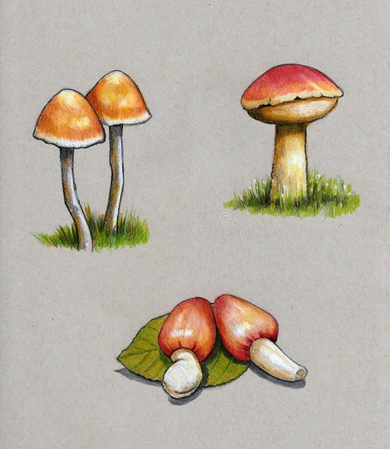 Champinjoner svamp, färgblyertspennakonst som är botanisk stock illustrationer