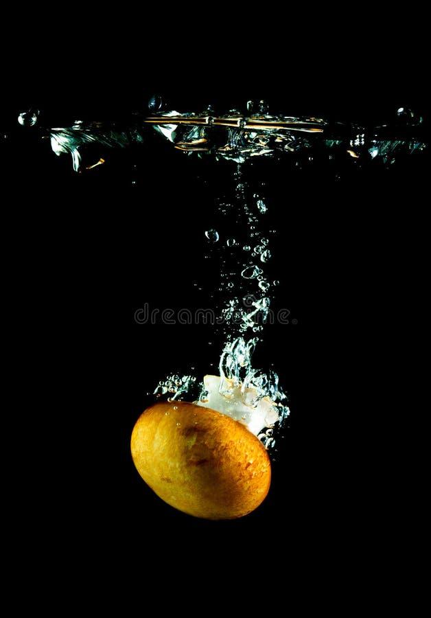 champinjonvatten fotografering för bildbyråer