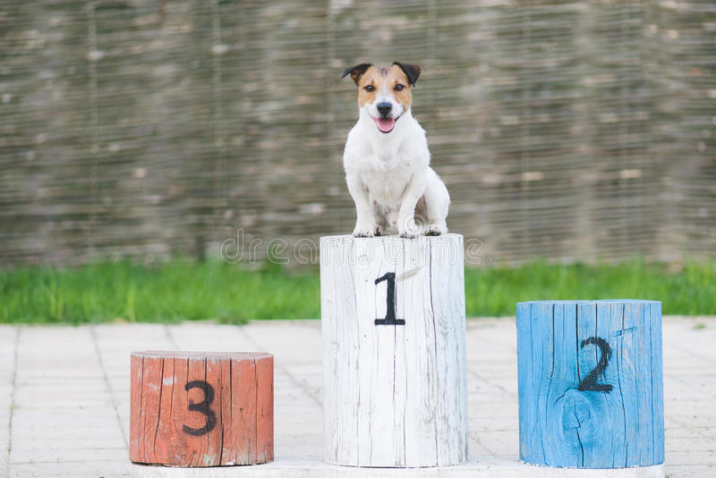 Champion dog on a pedestal at the first place royalty free stock photos
