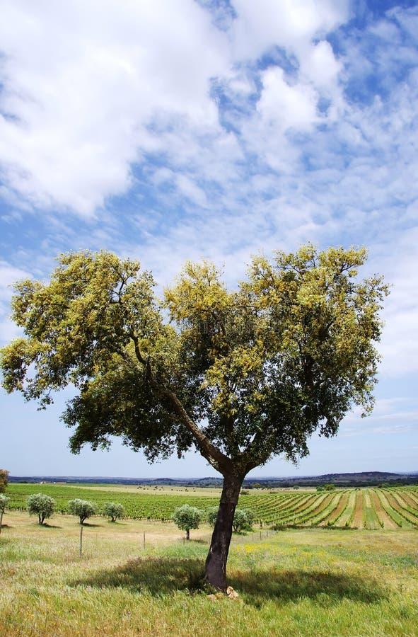 Champs agricoles avec le chêne de liège, l'Alentejo image libre de droits