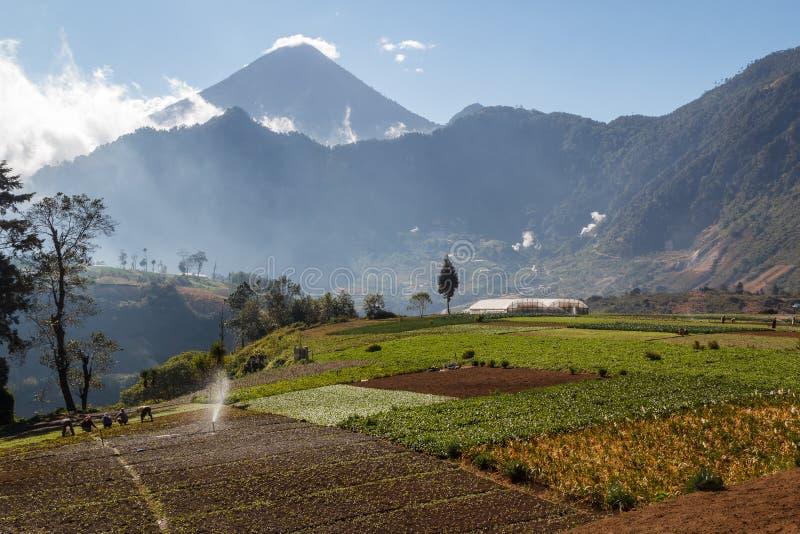 Champs au Guatemala central photos libres de droits