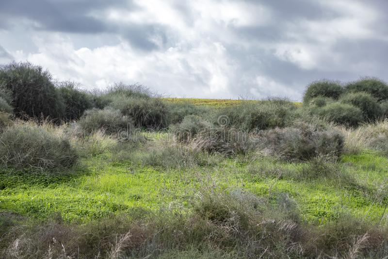 Champs couverts d'herbe verte et de buissons le long des bords sous un ciel avec des nuages noirs images stock