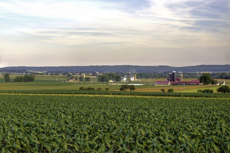 Champs d'agriculture dans son étape de début à une ferme de pays photo stock