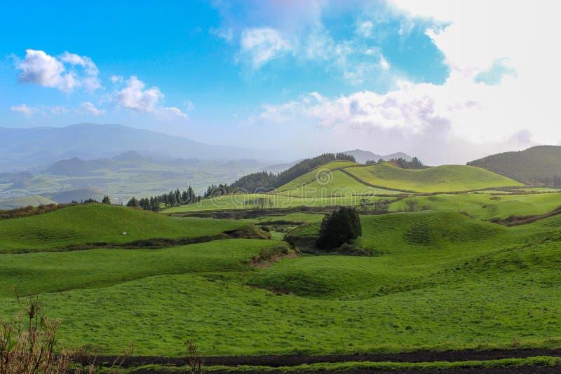 Champs d'herbe verte dans les montagnes photographie stock
