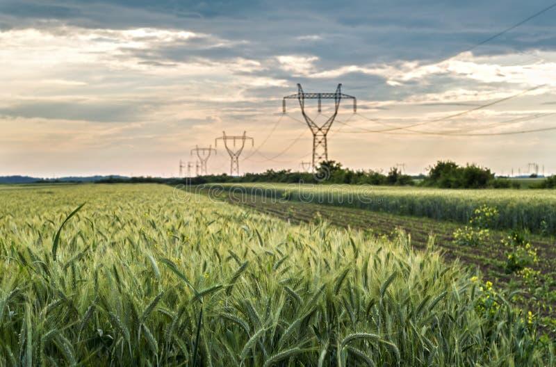 Champs de blé agricoles photos stock