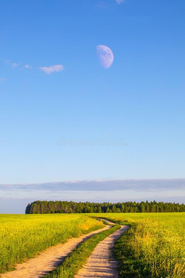 Champs de blé dans le jour ensoleillé d'été Moisson du pain Paysage rural avec le pré et les arbres images stock