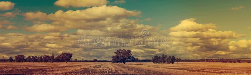 Champs de blé panoramiques de coucher du soleil d'hiver images libres de droits