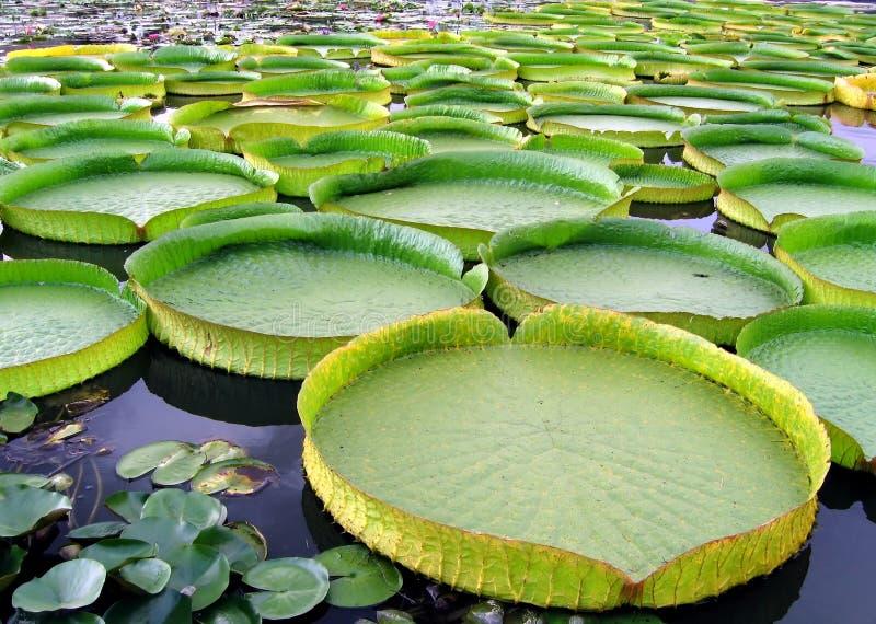 Champs de cablage à couches multiples de l'eau de Victoria photographie stock