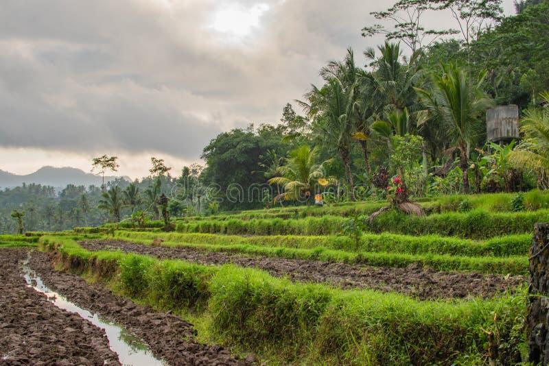 Champs de hausse sur Bali, Asie photographie stock libre de droits