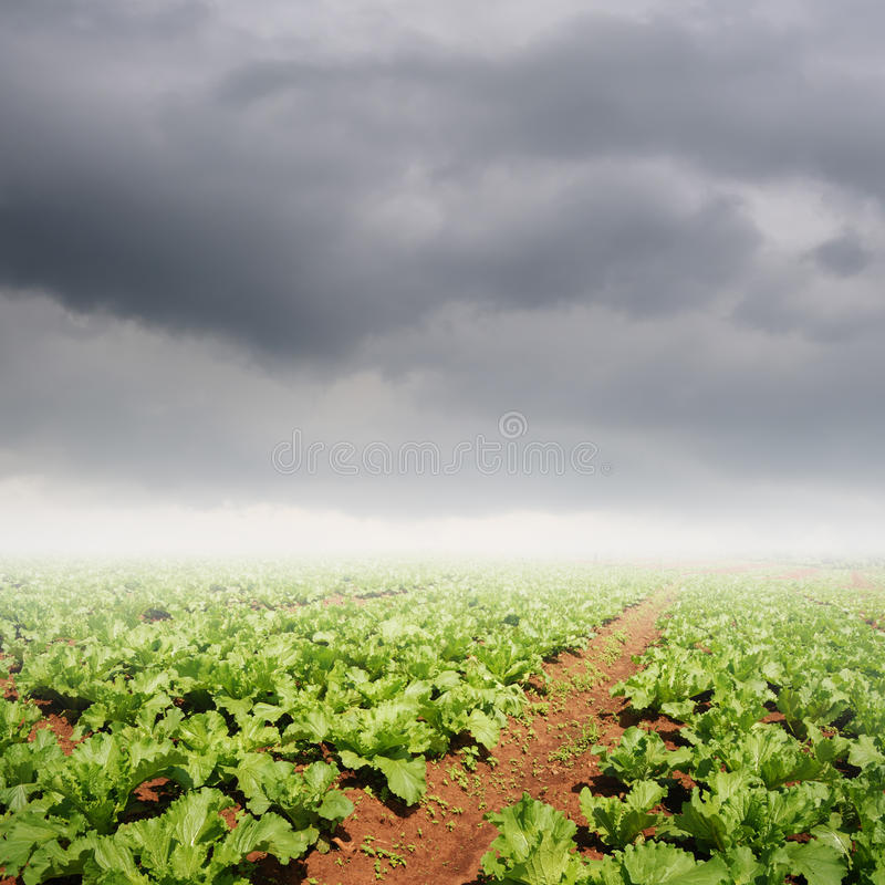 Champs de légumes et nuages de pluie pour l'agriculture image stock