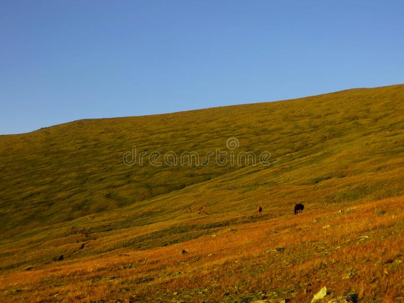 Champs de l'Altai images libres de droits