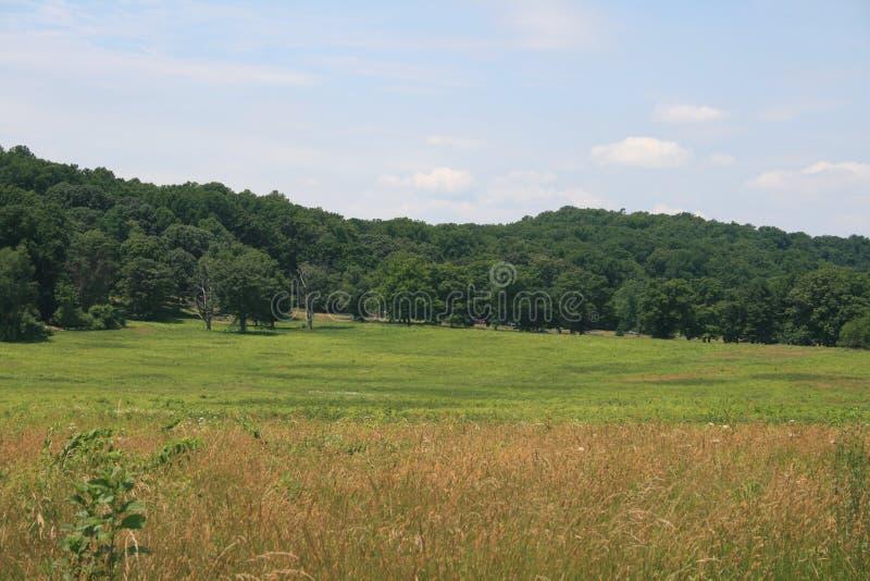 Champs de l'herbe, forêt d'arbres photos stock