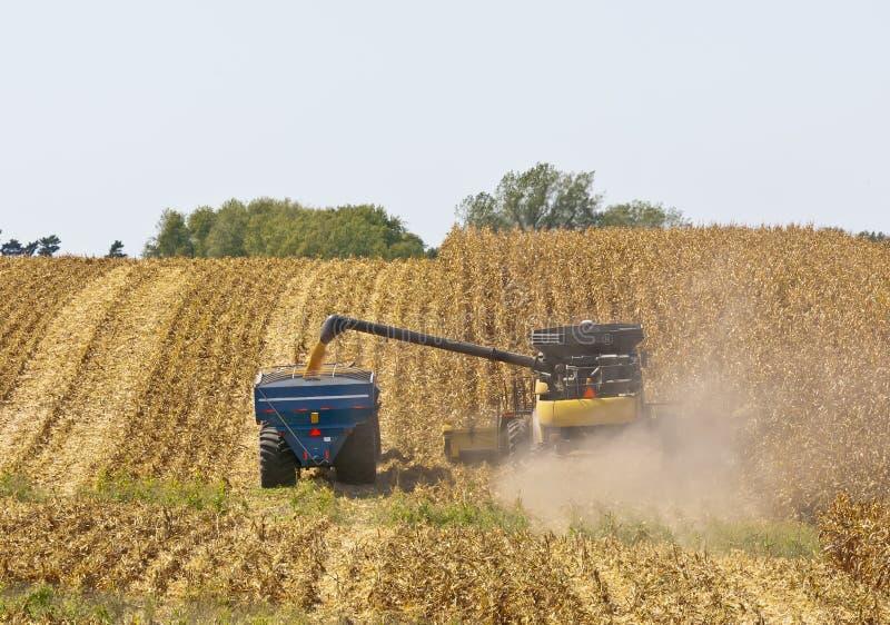 Champs de maïs de l'Iowa photos stock
