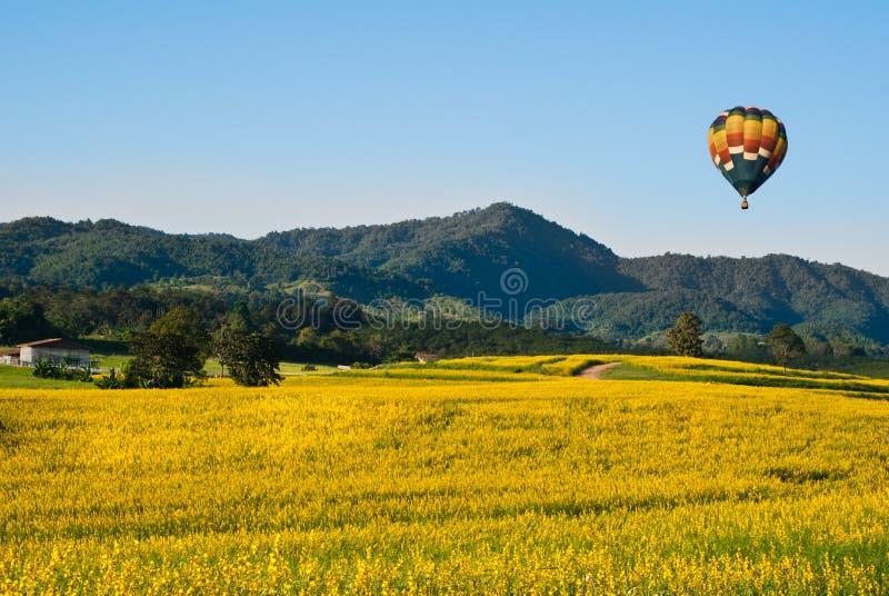 Champs des fleurs jaunes avec un ballon photographie stock