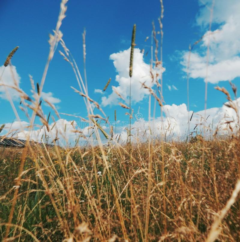 Champs du nord de la Carélie photo libre de droits