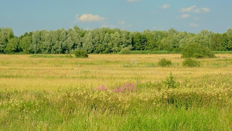 Champs ensoleillés avec des arbres sous un ciel bleu clair dans le reerve de nature de Kalkense Meersen, Flandre, Belgique photo stock