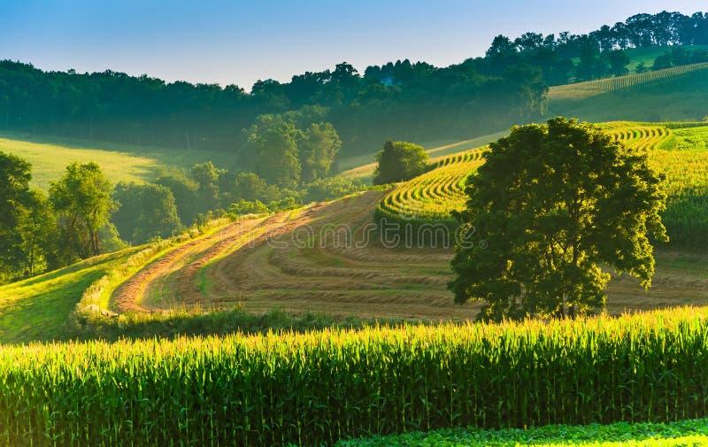 Champs et arbre de ferme sur un flanc de coteau dans le comté de York rural, Pennsyl photographie stock libre de droits