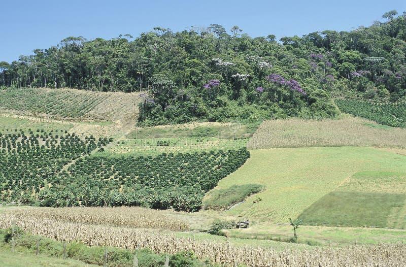 Champs et déboisement cultivés au Brésil du sud image stock