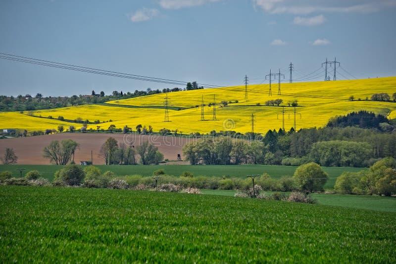 Champs et grille d'alimentation verts et jaunes photo stock