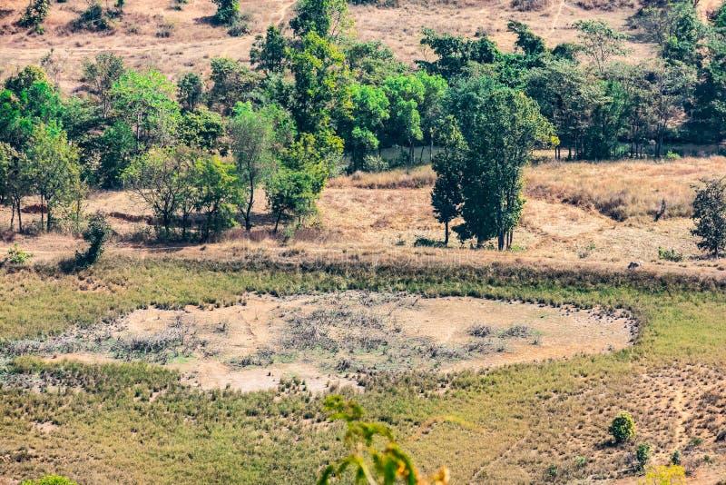Champs indiens de ferme et vue arial supérieure d'arbres des collines/montagne d'un village rural d'Inde image libre de droits
