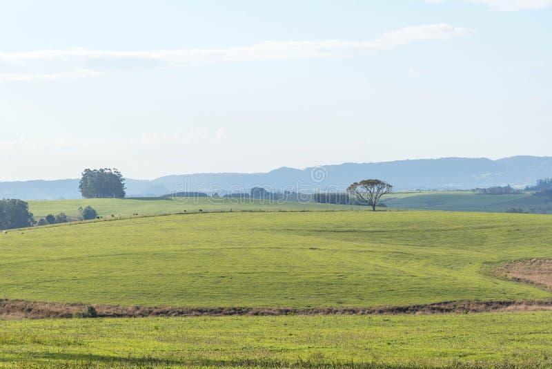 Champs ruraux de paysage en jachère 02 photo stock