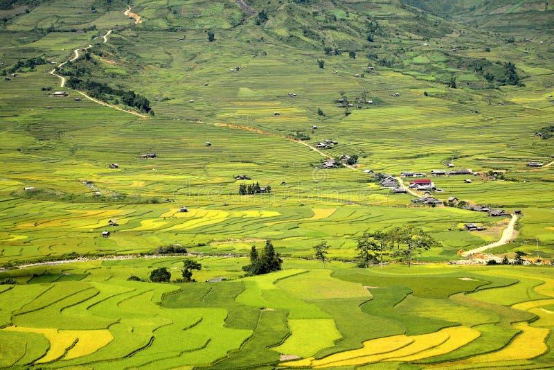 Champs traditionnels de terrasse de riz en MU Cang Chai à la région Vietnam de SAPA image libre de droits