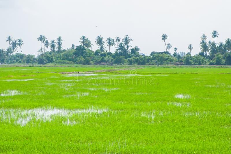 Champs verts dans Pulau Pinang images stock
