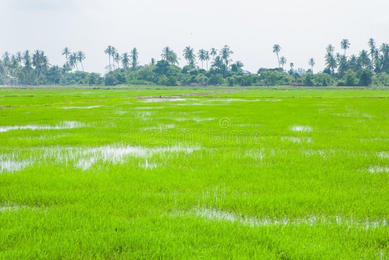 Champs verts dans Pulau Pinang photographie stock libre de droits