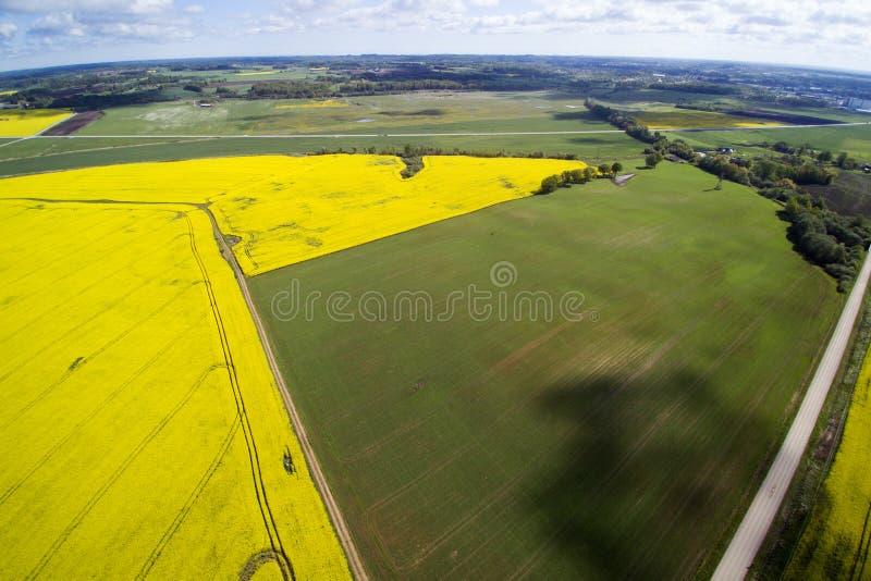Champs verts et jaunes dans le printemps letton images stock