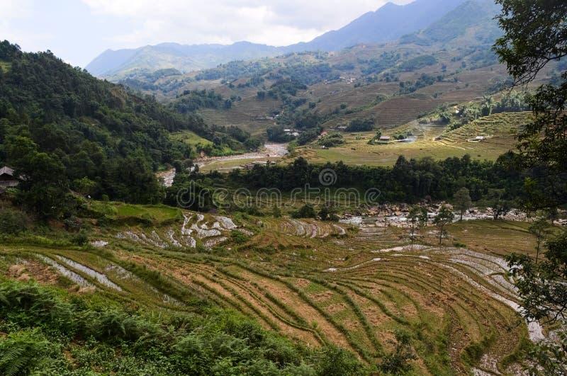 Champs vietnamiens c?l?bres de terrasse de riz dans la vall?e entre les montagnes image stock