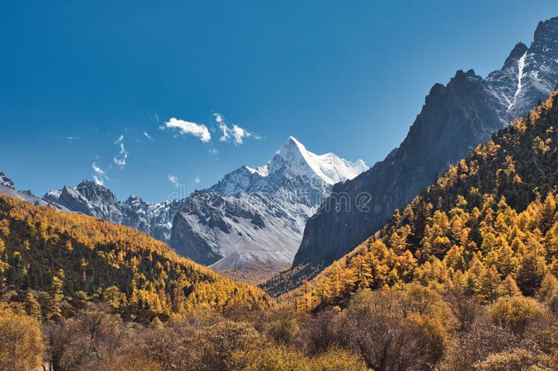 Chana Dorje holy mountain in autumn pine forest at Shangri-la. Yading nature reserve royalty free stock image