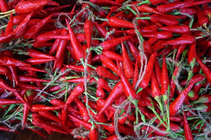 Chance rouge de paprika photo stock