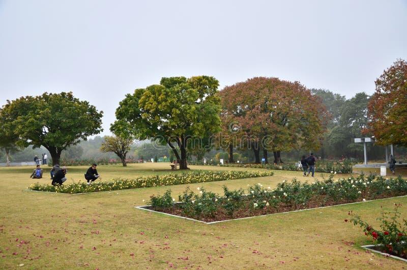 Chandigarh, India - 4 gennaio 2015: Visita Zakir Hussain Rose Garden della gente fotografie stock libere da diritti