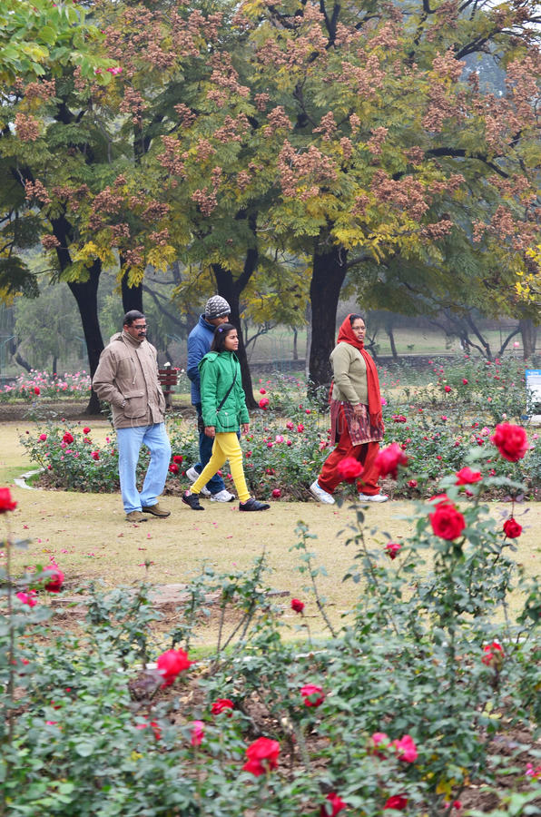 Chandigarh, India - January 4, 2015: Indian people visit Zakir Hussain Rose Garden. On January 4, 2015 in Chandigarh, India. Zakir Hussain Rose Garden, is a royalty free stock photo