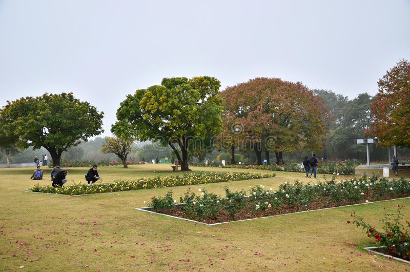 Chandigarh, India - January 4, 2015: People visit Zakir Hussain Rose Garden. On January 4, 2015 in Chandigarh, India. Zakir Hussain Rose Garden, is a botanical royalty free stock photos