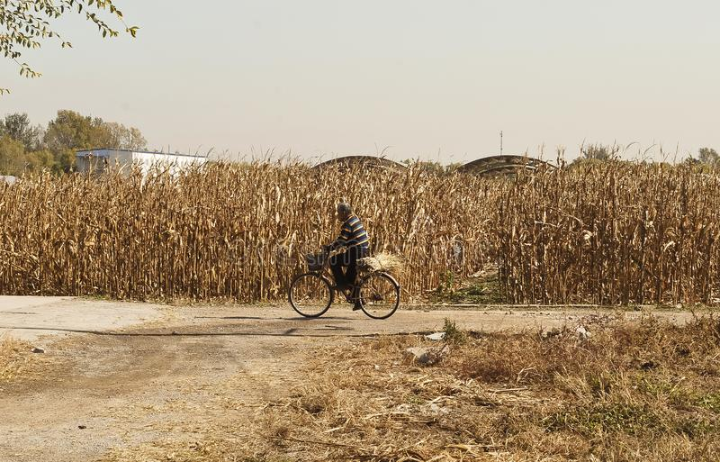 Chaneese bonde på cykeln royaltyfri fotografi