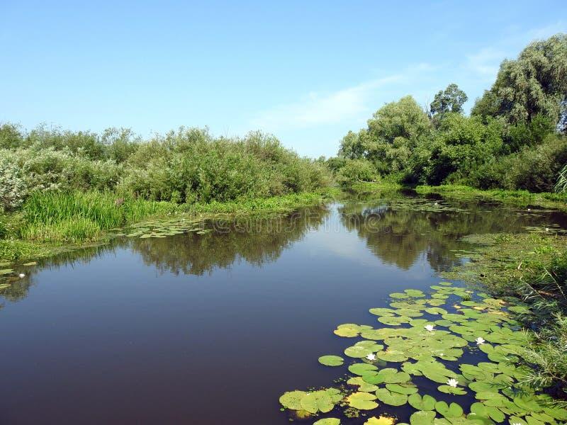 Chanel, plantas verdes y cielo azul, Lituania fotos de archivo
