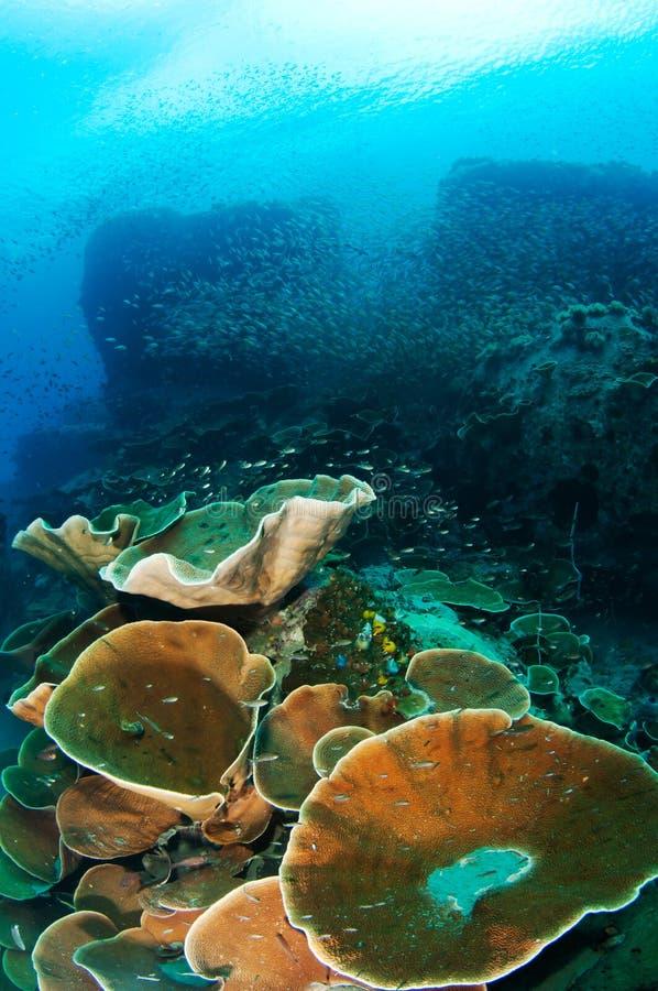 chang珊瑚酸值礁石泰国 免版税库存照片