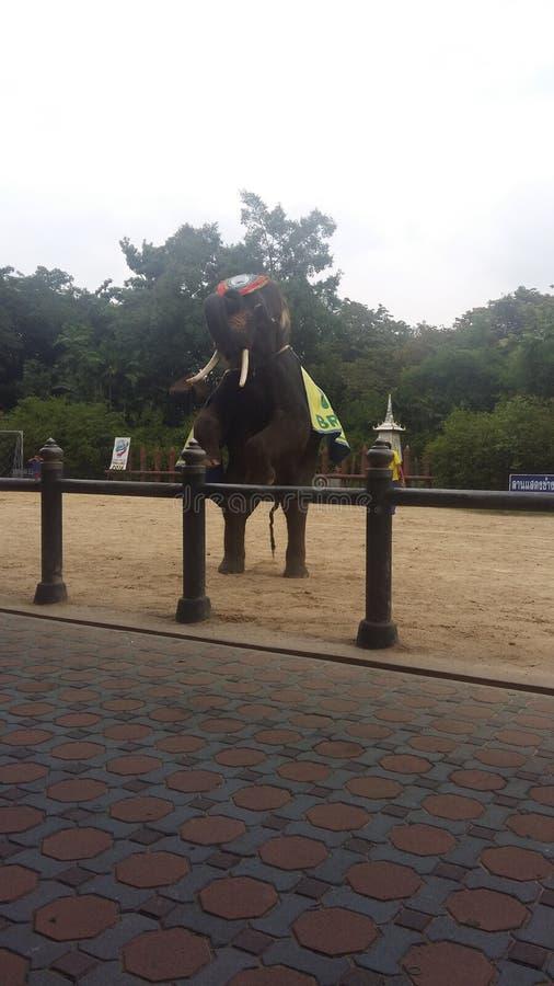 changcut changbeauty de changthai de Chang d'éléphant photo libre de droits