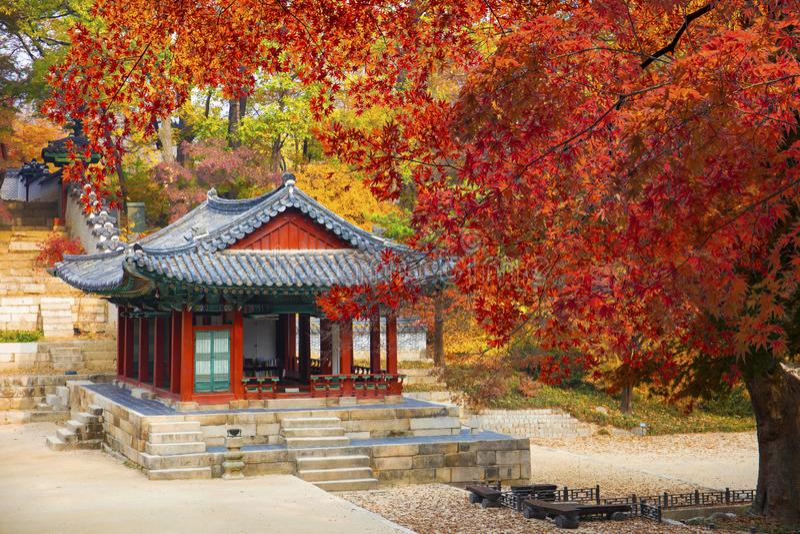 Changdeokgungs-Palast im Herbst Seoul Südkorea lizenzfreie stockbilder