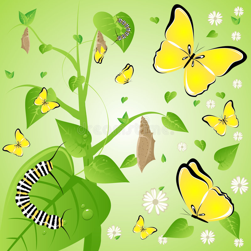 Download Change stock vector. Image of plant, birth, change, cocoon - 2990462