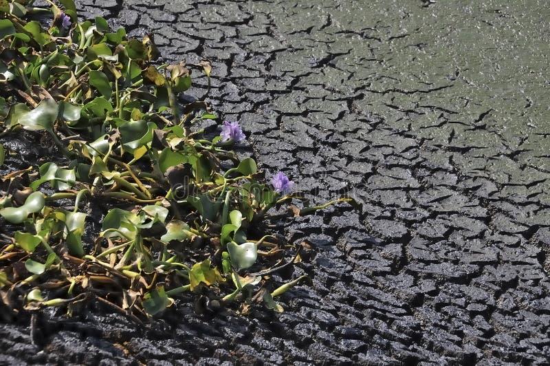Changement de climat - sol sec et plantes de mort photos stock