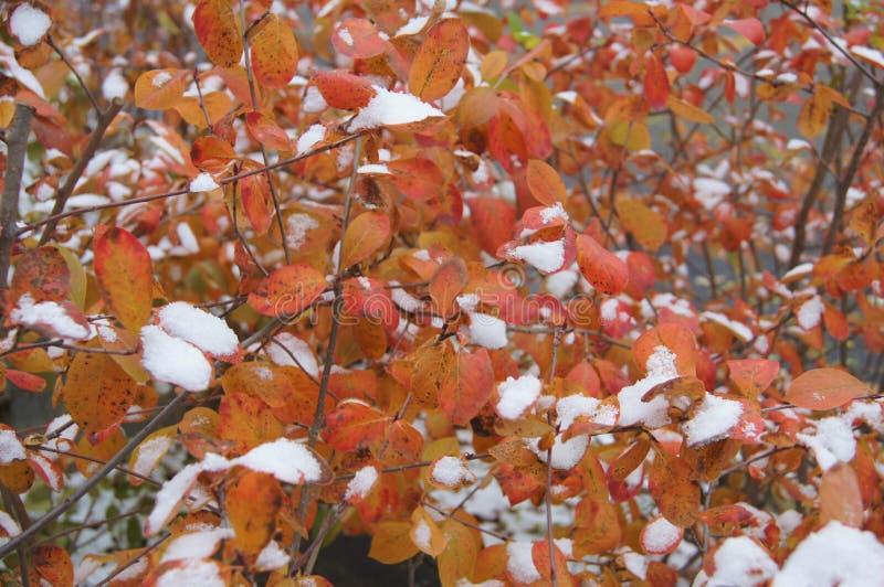 Changements saisonniers dans la banlieue de Chicago photo stock