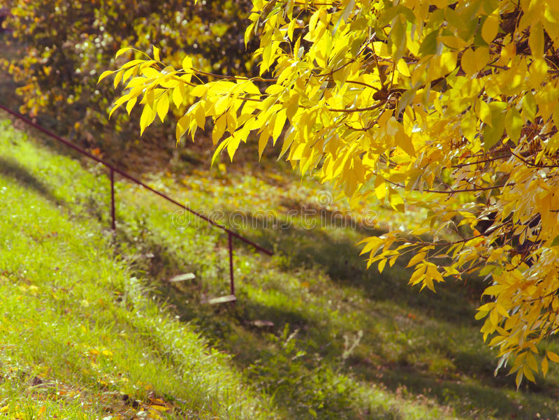 Changing colors. Autumn season landscape. Fallen yellow leaves on the shore. Hungarian countryside. Diagonal composition. Stairs.  stock image