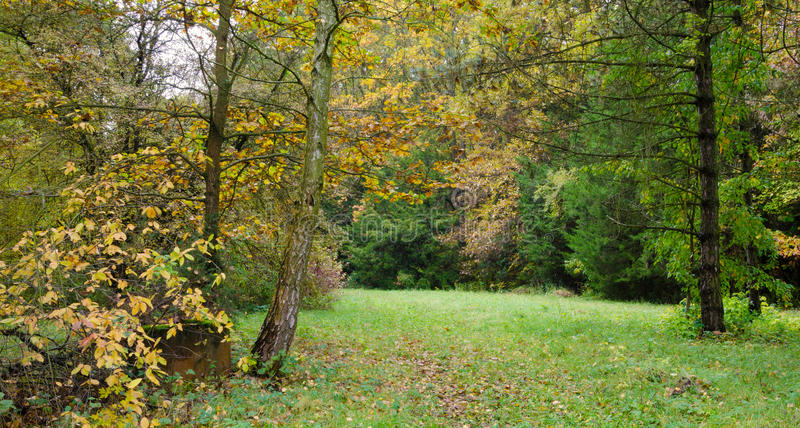 Changing colors of the forest. Vintage autumn season landscape in the Tiszalok Arboretum in Hungary. Hungarian countryside. Fallen yellow leaves. Well and stock photos